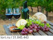 Купить «Red wine, cheese, bread and grapes against vineyard», фото № 31845443, снято 21 февраля 2020 г. (c) Яков Филимонов / Фотобанк Лори