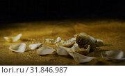 Купить «White rose and petals scattered on the glitter 4k», видеоролик № 31846987, снято 11 октября 2018 г. (c) Wavebreak Media / Фотобанк Лори