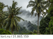 Coconut trees in Telok Melano, Sematan, Sarawak, Malaysia. Стоковое фото, фотограф Chua Wee Boo / age Fotostock / Фотобанк Лори