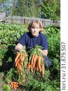 Middle age Caucasian woman pulls fresh red carrots on planted a vegetable garden in the back yard, autumn harvesting. Стоковое фото, фотограф Кекяляйнен Андрей / Фотобанк Лори