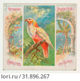 Купить «New Zealand Parrot, from Birds of the Tropics series (N38) for Allen & Ginter Cigarettes, 1889, Commercial color lithograph, Sheet: 2 7/8 x 3 1/4 in. ...», фото № 31896267, снято 27 апреля 2017 г. (c) age Fotostock / Фотобанк Лори