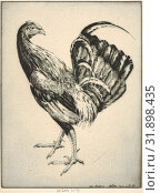 Game Cock (Carney Cock), 1931, Drypoint, plate: 11 5/8 x 8 3/4 in. (29.5 x 22.2 cm), Prints, Henry Emerson Tuttle (American, Lake Forest, Illinois 1890–1946 New Haven, Connecticut) (2017 год). Редакционное фото, фотограф © Copyright Artokoloro Quint Lox Limited / age Fotostock / Фотобанк Лори