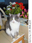 Серый кот Карлос отдыхает на балконе ночью среди цветов Gray cat Carlos resting on a balcony at night among flowers. Стоковое фото, фотограф Светлана Федорова / Фотобанк Лори