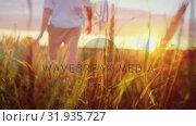 Купить «Man walking across a wheat field on a sunset», видеоролик № 31935727, снято 17 апреля 2019 г. (c) Wavebreak Media / Фотобанк Лори