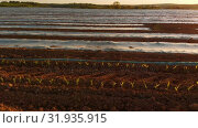 Купить «Furrows row pattern in a plowed field 4k», видеоролик № 31935915, снято 23 мая 2018 г. (c) Wavebreak Media / Фотобанк Лори