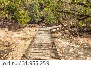 Path to the beach through mangrove forest (2018 год). Редакционное фото, фотограф Александр Бекишев / Фотобанк Лори
