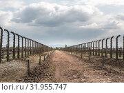 Купить «Barbed wire fence in two rows, Auschwitz II», фото № 31955747, снято 7 мая 2019 г. (c) Tryapitsyn Sergiy / Фотобанк Лори