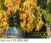 Осень в городе (2018 год). Стоковое фото, фотограф Татьяна Матвейчук / Фотобанк Лори