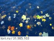 Купить «Осенние листья клена на поверхности воды», фото № 31985103, снято 17 октября 2017 г. (c) Татьяна Белова / Фотобанк Лори