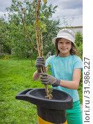 Купить «Девочка работает в саду, измельчает ветки», фото № 31986227, снято 5 августа 2019 г. (c) Александр Романов / Фотобанк Лори