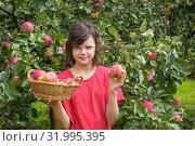 Купить «Девочка с корзинкой яблок», фото № 31995395, снято 8 августа 2019 г. (c) Александр Романов / Фотобанк Лори