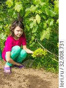 Купить «Девочка в саду и зеленый виноград. Август», фото № 32008731, снято 8 августа 2019 г. (c) Александр Романов / Фотобанк Лори