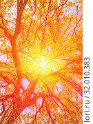 Купить «The sun's rays make their way through the foliage of a tree on an autumn day.», фото № 32010383, снято 7 октября 2018 г. (c) Акиньшин Владимир / Фотобанк Лори