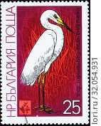 Купить «Great Egret, Great White Egret, White Heron, Casmerodius albus, postage stamp, Bulgaria, 1981.», фото № 32054931, снято 19 октября 2014 г. (c) age Fotostock / Фотобанк Лори