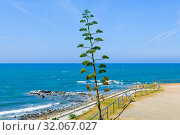 Chaparral Beach in Mijas, Málaga, Andalusia, Spain, Europe. Стоковое фото, фотограф José Luis Hidalgo Salguero / easy Fotostock / Фотобанк Лори