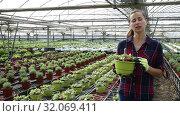 Купить «Portrait of successful smiling woman farmer working in greenhouse, engaged in cultivation of potted portulaca», видеоролик № 32069411, снято 3 июня 2019 г. (c) Яков Филимонов / Фотобанк Лори