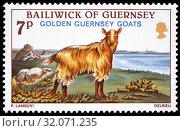 Golden Guernsey Goat, Capra aegagrus hircus, postage stamp, UK, Bailiwick of Guernsey, 1980. (2012 год). Редакционное фото, фотограф Ivan Vdovin / age Fotostock / Фотобанк Лори