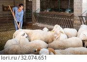 Купить «Portrait of female farmer feeding sheeps on farm», фото № 32074651, снято 22 сентября 2019 г. (c) Яков Филимонов / Фотобанк Лори