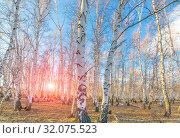 Купить «birch forest against the blue sky on a spring sunny day», фото № 32075523, снято 24 апреля 2019 г. (c) Акиньшин Владимир / Фотобанк Лори
