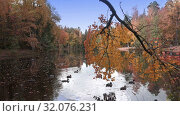 Купить «Sunny day on the shore of a forest lake early autumn. Trees with green, yellow and red leaves reflect in the water. Leaves from trees fall into the pond, Ducks swim on water preparing for flight», видеоролик № 32076231, снято 19 августа 2009 г. (c) Куликов Константин / Фотобанк Лори