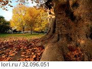 Italia, Lombardia, Milano, Parco Sempione, Стоковое фото, фотограф La Monaca Davide / AGF / age Fotostock / Фотобанк Лори
