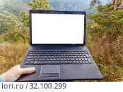 An open black laptop stands on old stones in a dense forest. Стоковое фото, фотограф Акиньшин Владимир / Фотобанк Лори