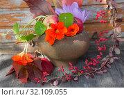 Купить «Осенний дачный натюрморт», фото № 32109055, снято 31 августа 2019 г. (c) Галина Савина / Фотобанк Лори