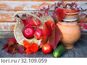 Купить «Осенний дачный натюрморт», фото № 32109059, снято 31 августа 2019 г. (c) Галина Савина / Фотобанк Лори