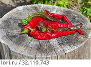 Купить «Стручки острого перца лежат на старом пне», фото № 32110743, снято 26 августа 2019 г. (c) Елена Коромыслова / Фотобанк Лори