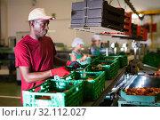 Купить «Positive Afro workman stacking boxes with harvested peaches on fruits sorting department», фото № 32112027, снято 11 ноября 2019 г. (c) Яков Филимонов / Фотобанк Лори