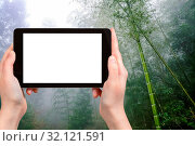 Купить «Travel concept - tourist photographs wet rainforest in area of Dazhai Longsheng (Dragon's Backbone, Longji) Rice Terraces county in spring season on tablet with cut out screen for advertising logo», фото № 32121591, снято 3 августа 2020 г. (c) easy Fotostock / Фотобанк Лори