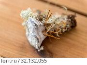 Купить «hydnellum fungus on wooden background», фото № 32132055, снято 13 сентября 2018 г. (c) Syda Productions / Фотобанк Лори