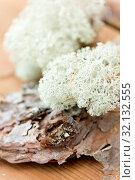 Купить «close up of reindeer lichen moss on pine tree bark», фото № 32132555, снято 13 сентября 2018 г. (c) Syda Productions / Фотобанк Лори