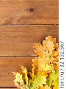 Купить «oak leaves in autumn colors on wooden table», фото № 32132567, снято 13 сентября 2018 г. (c) Syda Productions / Фотобанк Лори