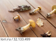 variegated bolete mushrooms on wooden background. Стоковое фото, фотограф Syda Productions / Фотобанк Лори