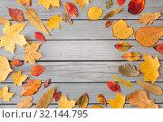 Купить «round frame of different dry fallen autumn leaves», фото № 32144795, снято 25 октября 2018 г. (c) Syda Productions / Фотобанк Лори