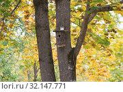 Купить «Скворечник-дуплянка на дереве», фото № 32147771, снято 7 сентября 2019 г. (c) Ельцов Владимир / Фотобанк Лори