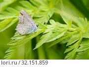 Купить «Маленькая бабочка сидит на траве», эксклюзивное фото № 32151859, снято 27 мая 2019 г. (c) Игорь Низов / Фотобанк Лори