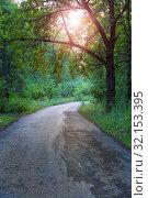 Купить «Twisting road in the old wood», фото № 32153395, снято 25 июля 2013 г. (c) Юрий Бизгаймер / Фотобанк Лори