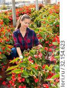 Купить «Female florist arranging potted begonias», фото № 32154623, снято 14 декабря 2019 г. (c) Яков Филимонов / Фотобанк Лори