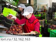 Two young women working on producing sorting line. Стоковое фото, фотограф Яков Филимонов / Фотобанк Лори