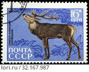 Купить «Red Deer, Cervus elaphus, Fauna of Sikhote-Alin Nature Reserve, postage stamp, Russia, USSR, 1970.», фото № 32167987, снято 5 января 2011 г. (c) age Fotostock / Фотобанк Лори