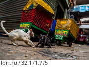 Купить «Street cats fight for the territory in the market of Bazurto in Cartagena, Colombia, 14 December 2017. Far from the touristy places in the walled city...», фото № 32171775, снято 14 декабря 2017 г. (c) age Fotostock / Фотобанк Лори