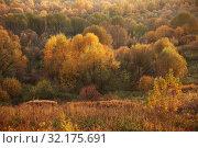 Купить «Colorful autumn forest, colorful trees, grass and shrubs», фото № 32175691, снято 17 октября 2018 г. (c) Ольга Зиновская / Фотобанк Лори