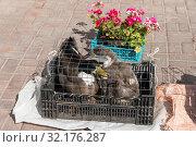 Купить «Утки в клетке на рынке», эксклюзивное фото № 32176287, снято 4 сентября 2019 г. (c) Александр Щепин / Фотобанк Лори