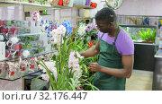 Купить «Smiling African American male florist selling fresh flowers in his shop, offering blooming pink orchid», видеоролик № 32176447, снято 26 марта 2019 г. (c) Яков Филимонов / Фотобанк Лори