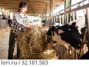 Купить «Farm worker feeding cows with hay», фото № 32181583, снято 29 мая 2019 г. (c) Яков Филимонов / Фотобанк Лори