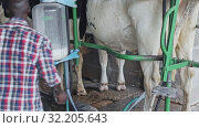 Купить «Farmer young man working with automatical cow milking machines», видеоролик № 32205643, снято 15 октября 2019 г. (c) Яков Филимонов / Фотобанк Лори