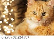 Купить «close up of red tabby cat», фото № 32224707, снято 15 ноября 2017 г. (c) Syda Productions / Фотобанк Лори