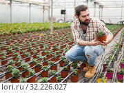 Купить «Man gardener working with tomatoes seedling in pots in greenhouse», фото № 32226027, снято 9 апреля 2019 г. (c) Яков Филимонов / Фотобанк Лори